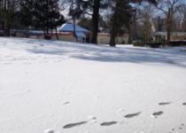 Image Les Châtaigniers sous la neige - février 2021